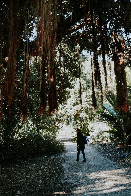 sf california san francisco travel photos botanical garden flower nature tribe archipelago redwood tree photographer wanderlust -11