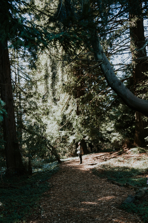 sf california san francisco travel photos botanical garden flower nature tribe archipelago redwood tree photographer wanderlust -13