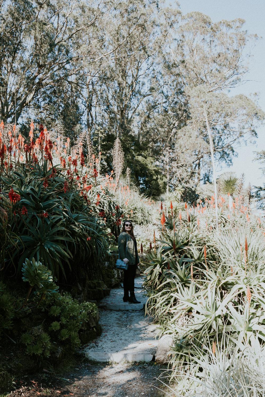 sf california san francisco travel photos botanical garden flower nature tribe archipelago redwood tree photographer succulent cactus wanderlust -11