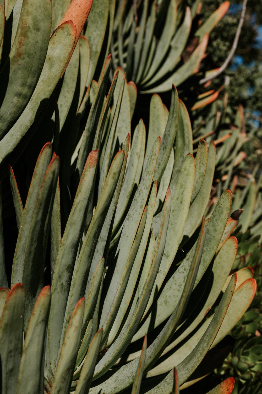 sf california san francisco travel photos botanical garden flower nature tribe archipelago redwood tree photographer succulent cactus wanderlust -17