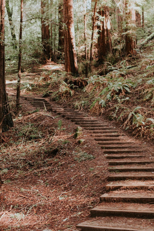 Redwood Muir Woods San Francisco California Travel Hike nature wanderlust CA SF best things to do in northern cali