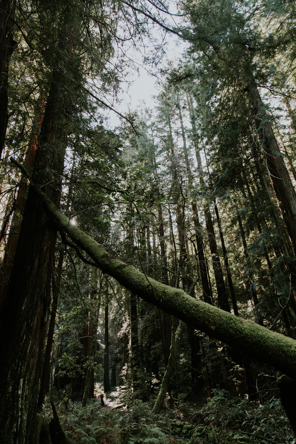 Redwood Muir Woods San Francisco California Travel Hike nature wanderlust CA SF best things to do in northern cali map trail adventure photographer photography 0