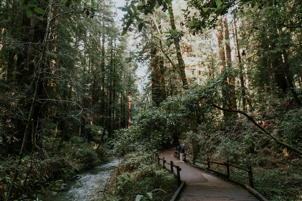 Redwood Muir Woods San Francisco California Travel Hike nature wanderlust CA SF best things to do in northern cali map trail adventure photographer photography giant tree moss