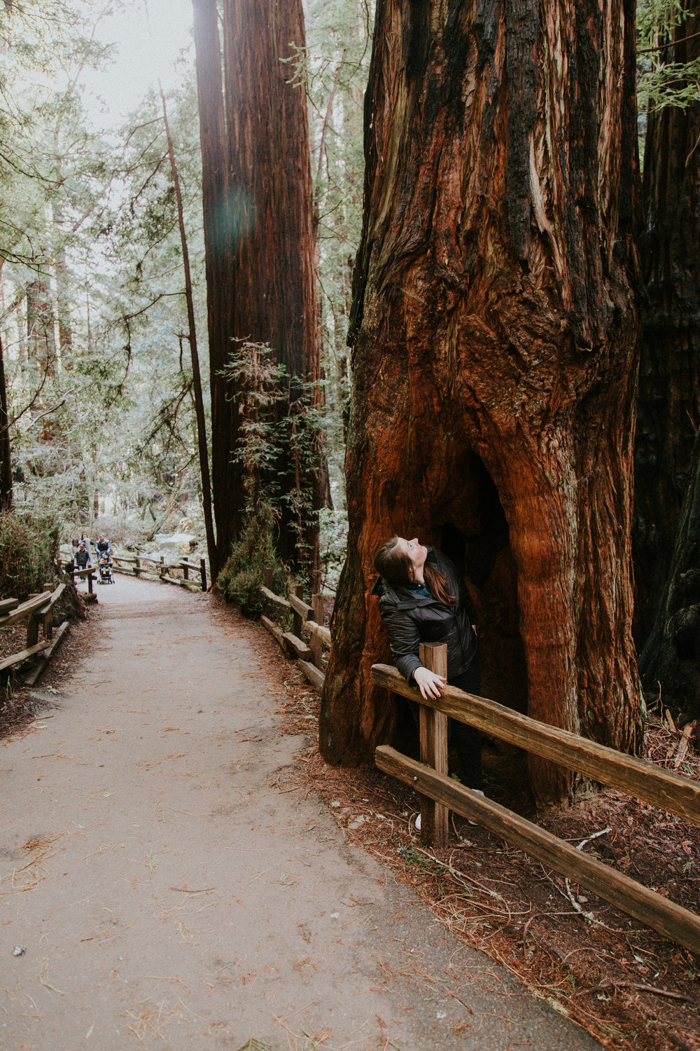 Redwood Muir Woods San Francisco California Travel Hike nature wanderlust CA SF best things to do in northern cali map trail adventure photographer photography moss giant tree