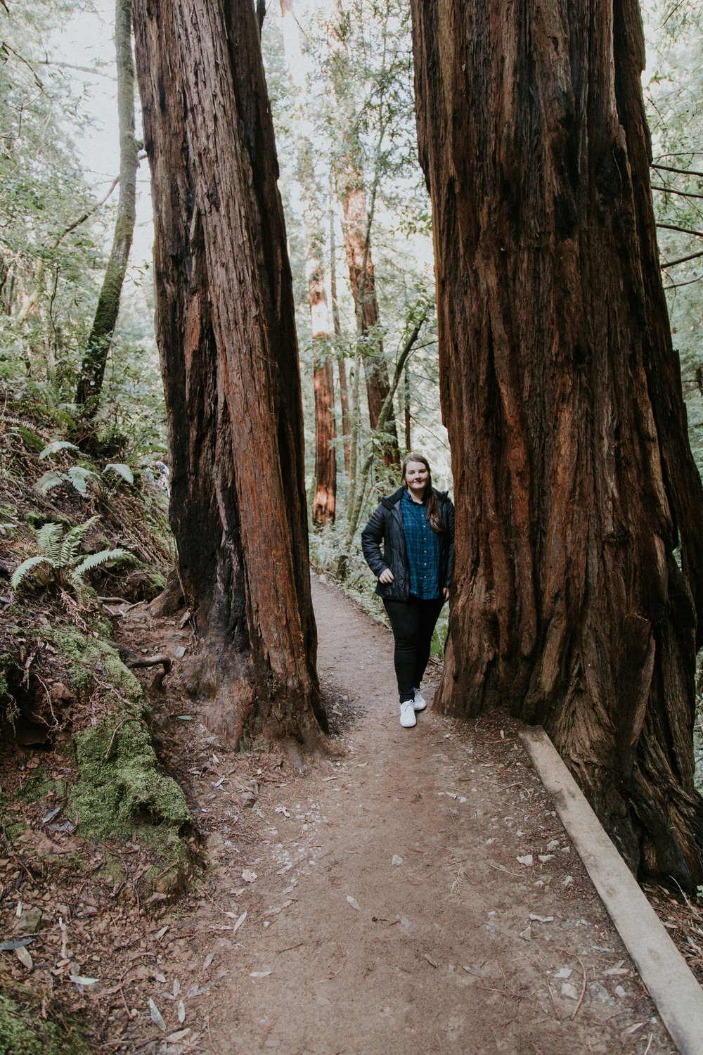 Redwood Muir Woods San Francisco California Travel Hike nature wanderlust CA SF best things to do in northern cali map trail adventure photographer photography giant tree moss REI