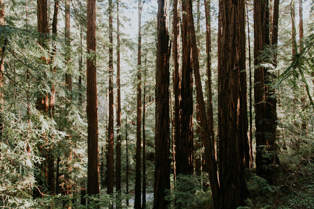 Redwood Muir Woods San Francisco California Travel Hike nature wanderlust CA SF best things to do in northern cali map trail adventure photographer photography giant tall trees