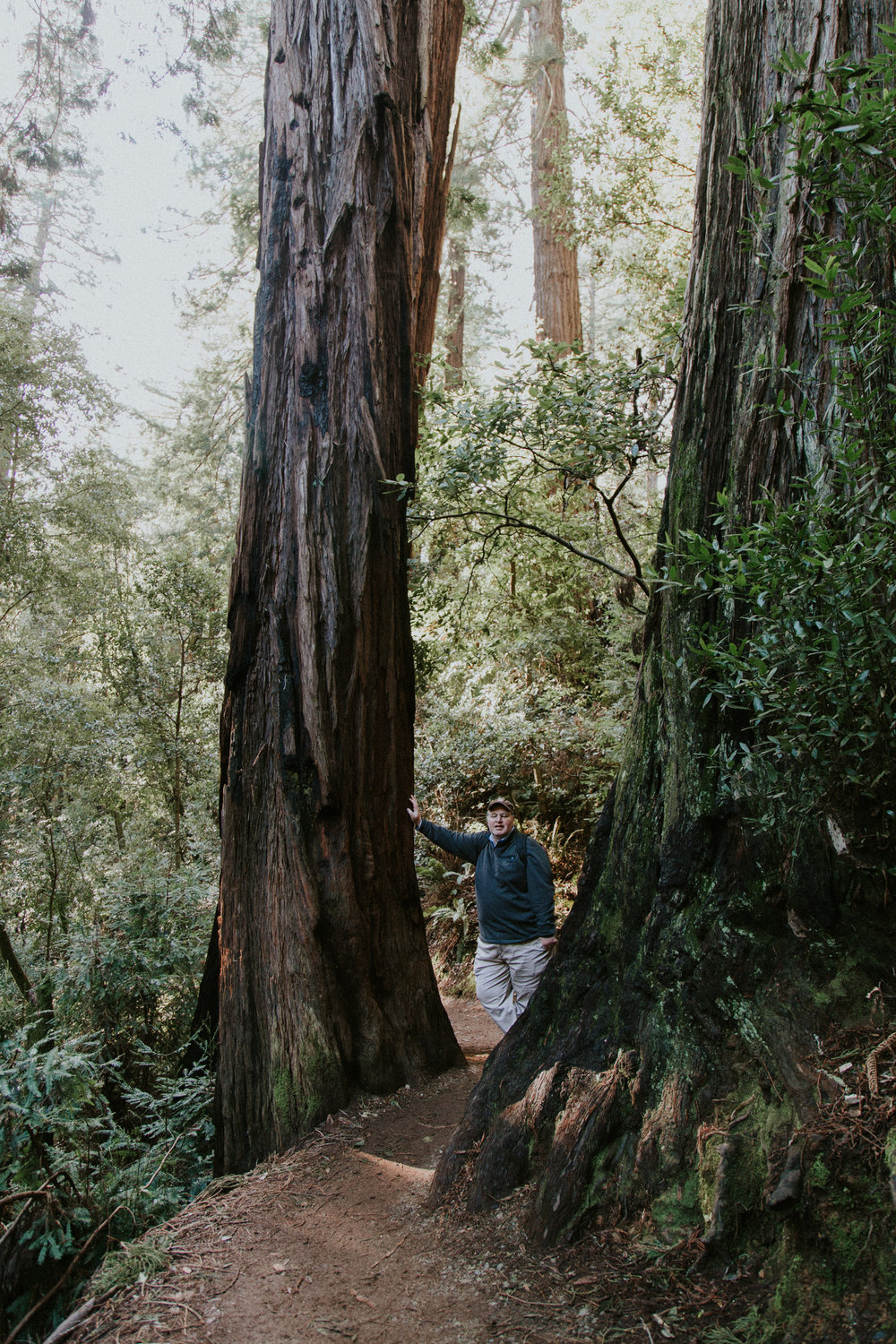Redwood Muir Woods San Francisco California Travel Hike nature wanderlust CA SF best things to do in northern cali map trail adventure photographer photography giant tree