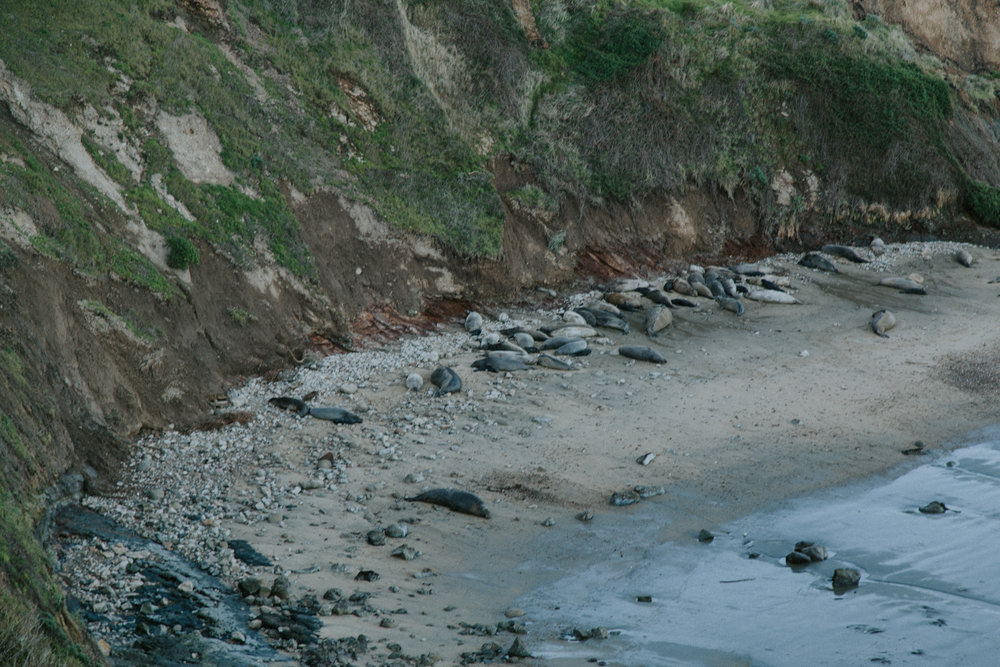 It may look like a bunch of rocks, but those are actually Elephant Seals relaxing on the beach!