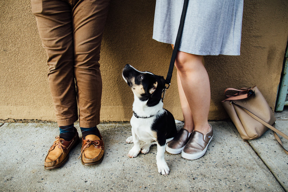 Gus Puppy Photoshoot Queens NYC-4.jpg
