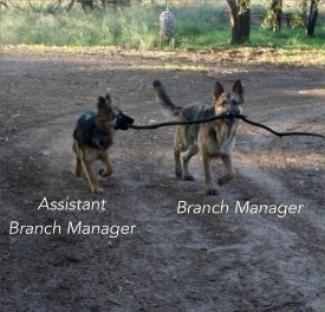 10 - Branch Manager.jpg