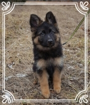 Ken puppy 2.jpg
