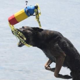 dock diving.jpg