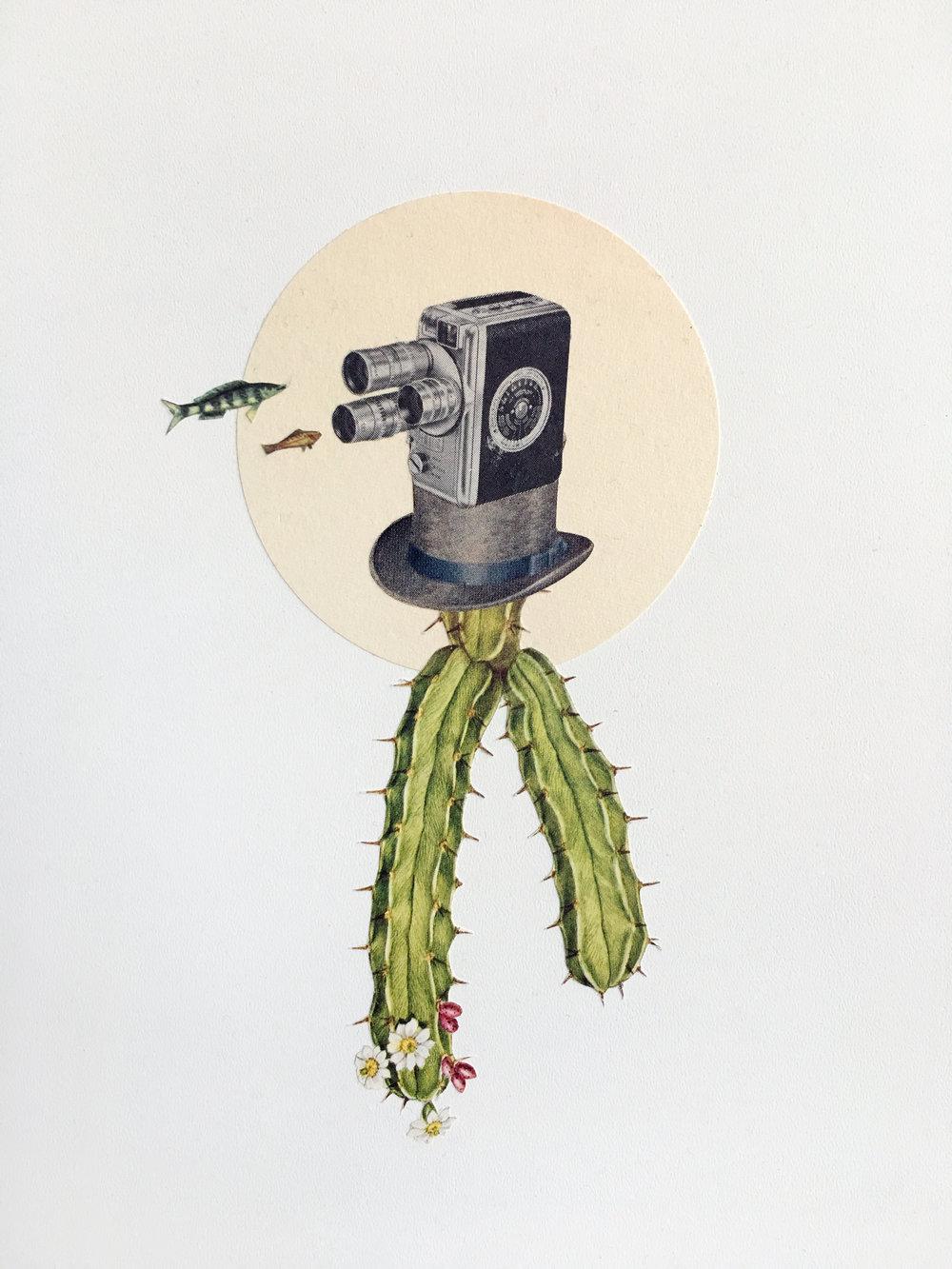 Myrtillocactusien