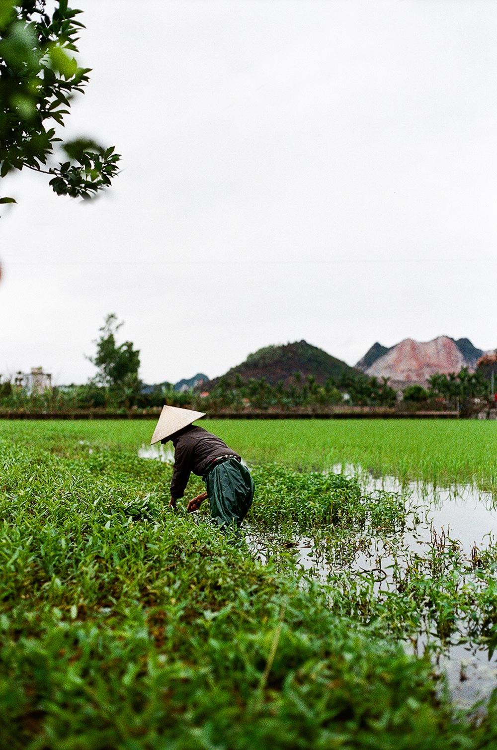 ThailandVietnam-0015.jpg