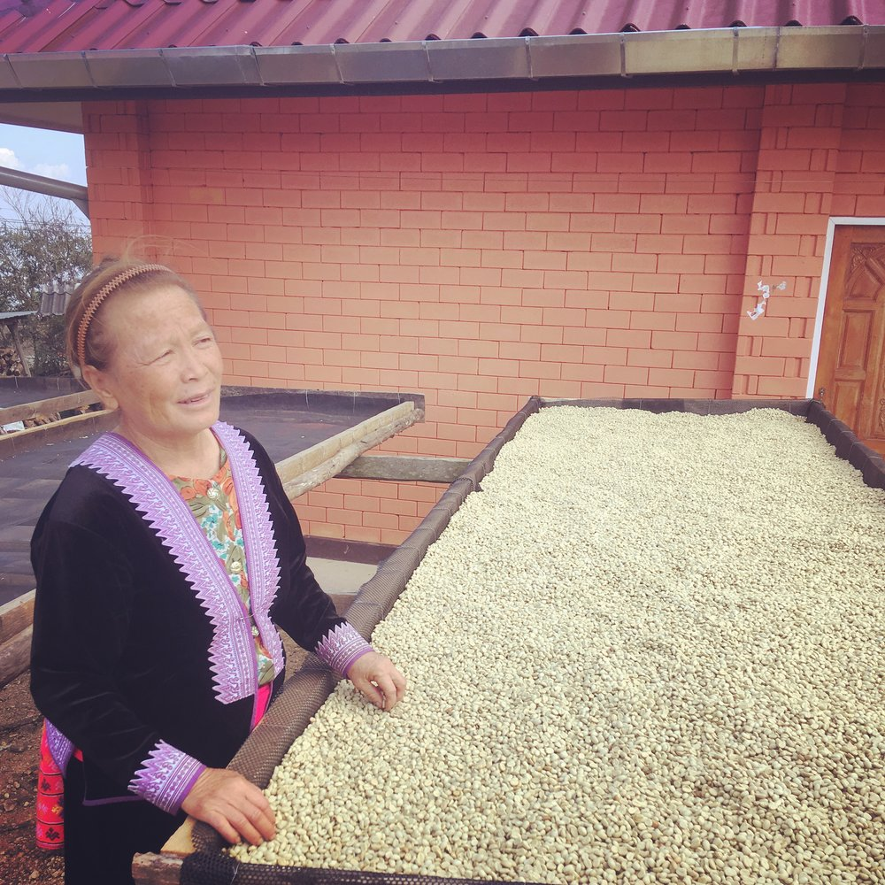 Hmong villager prepping coffee beans for roasting