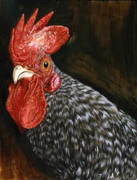 Scots Grey Chicken