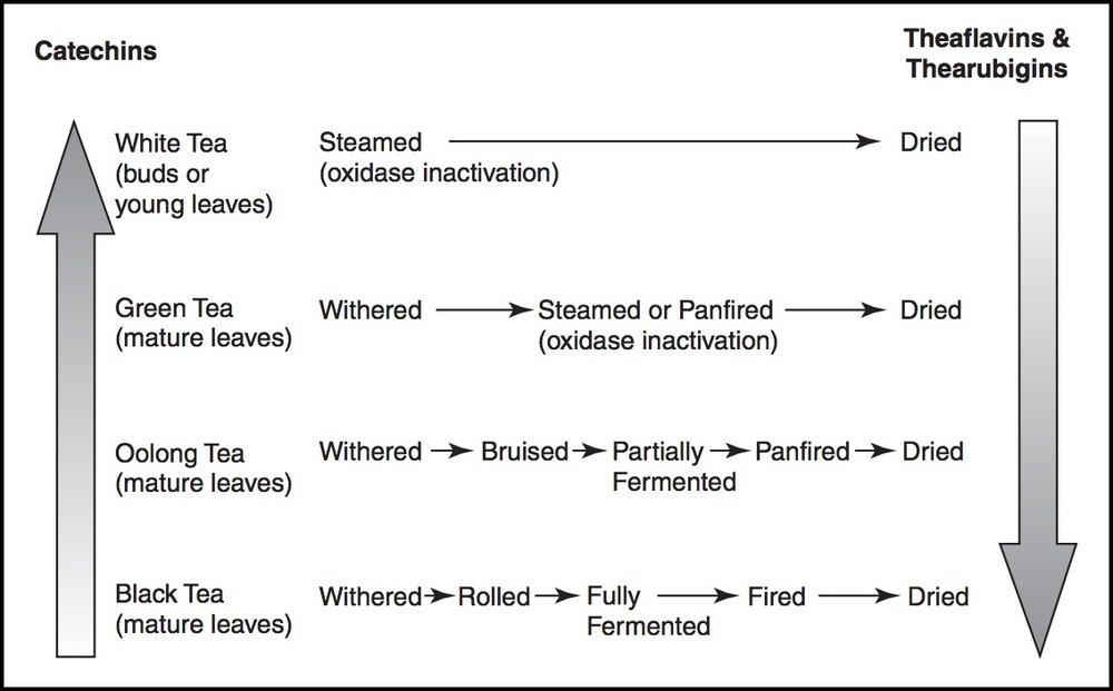 Image ref:Cooper R, Morré DJ, Morré DM. Medicinal benefits of green tea: Part I. Review of noncancer health benefits. Journal of Alternative & Complementary Medicine. 2005 Jun 1;11(3):521-8.