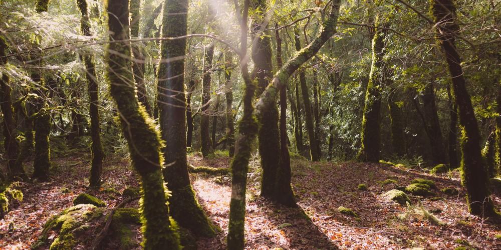 forest-7485.jpg
