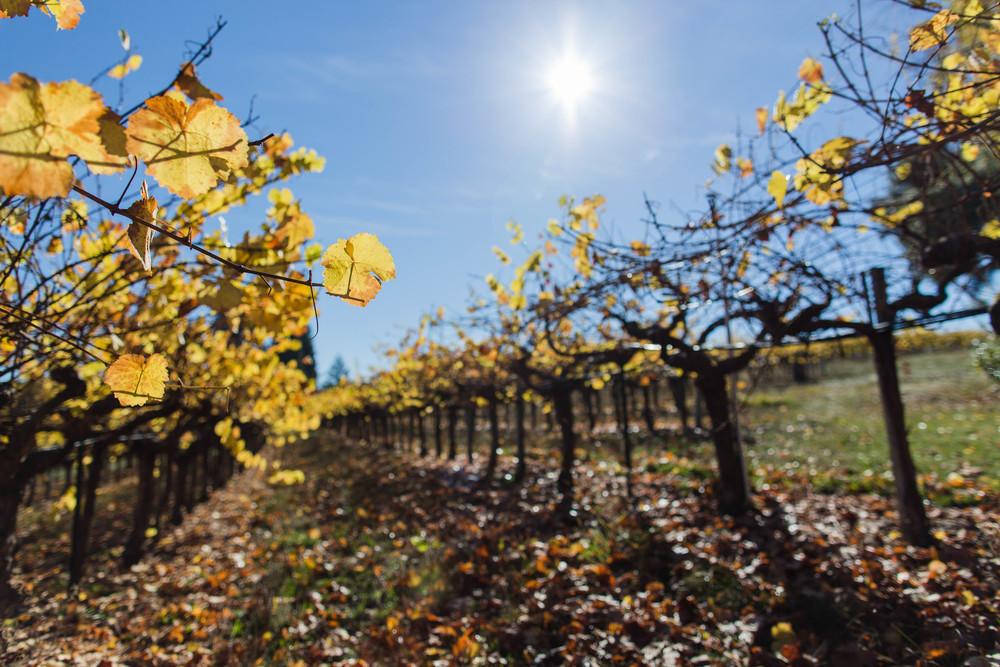 vines-7985.jpg