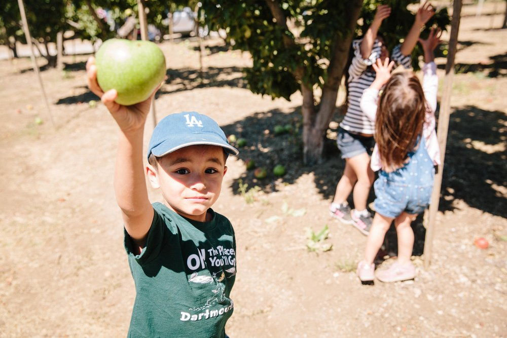 Apple Picking Oak Glen-2.JPG