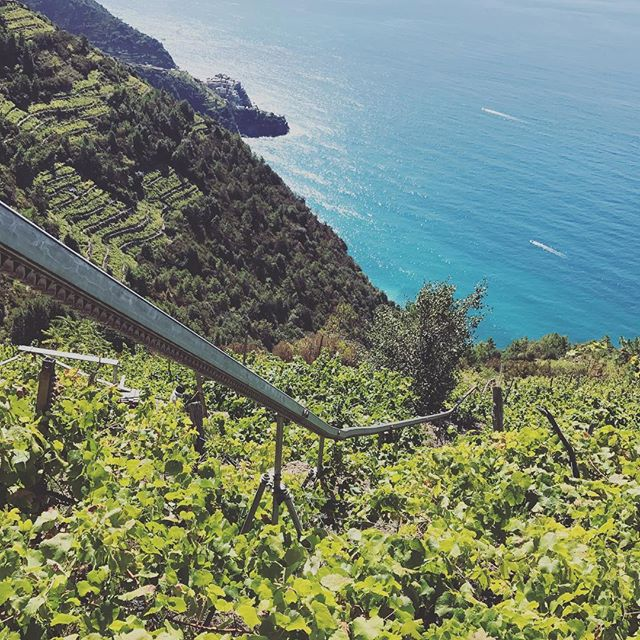 This rainy weather has us dreaming about our Italian getaway. Check out those terraced vines!#cinqueterrenationalpark #unescoworldheritagesites #fbfriday