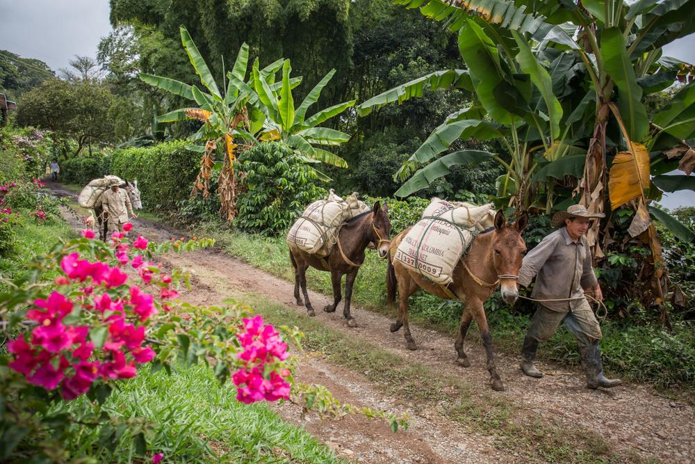 TG_151128_Antioquia_0296.jpg
