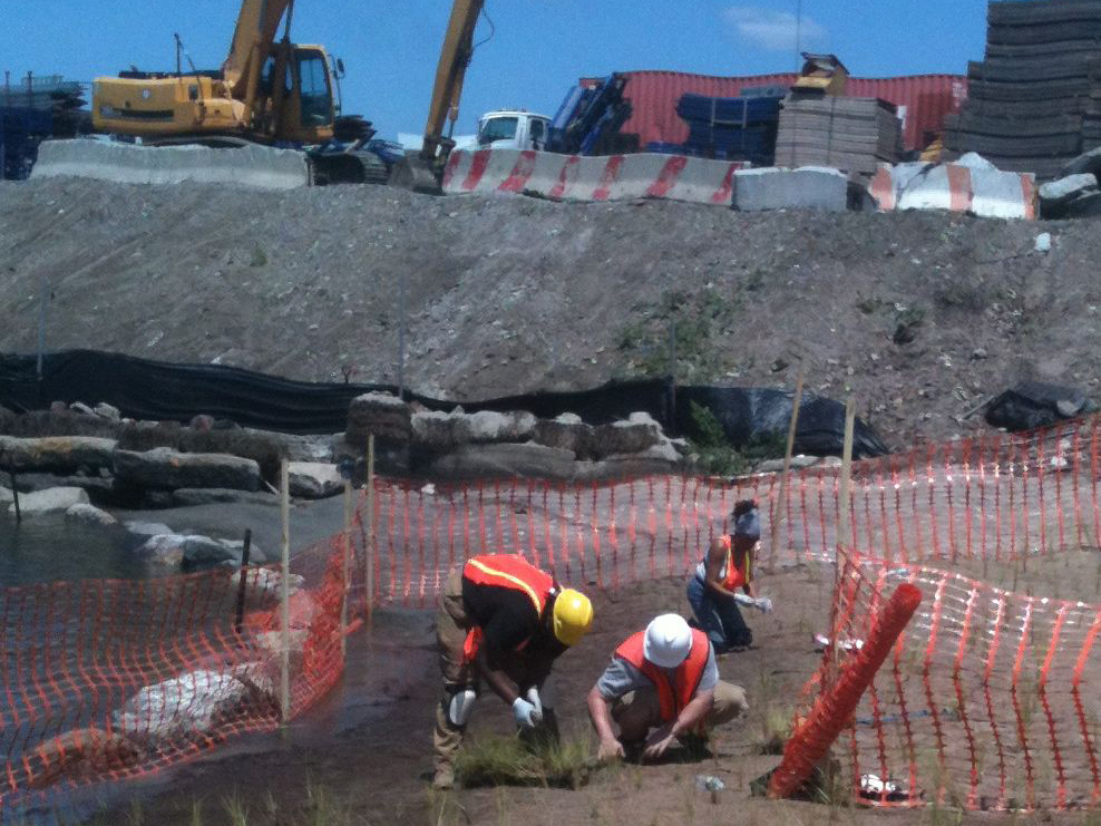 p-oak point wetlands construction.jpg
