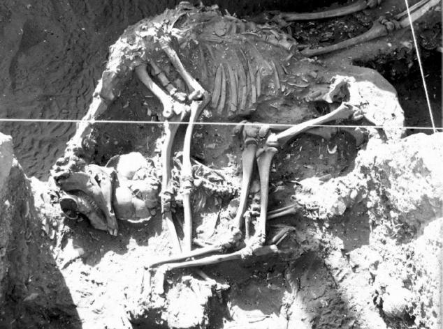 Imagen 1: Camélido rodea a infante y cubre adulto (Fuente: Castelletti et al. 2010).