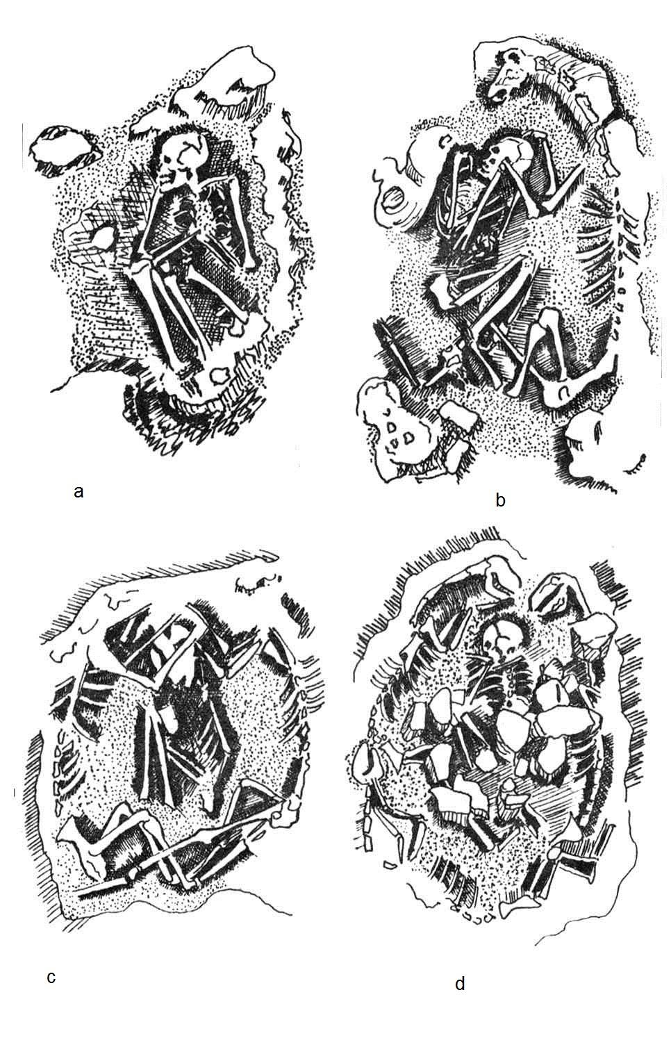 Imagen 2: Croquis de sepulturas [a: sepultura de un individuo sin camélido. b: sepultura de un individuo con un camélido. c: sepultura con dos camélidos rodeando un individuo. d: sepultura con tres camélidos rodeando un individuo]. (Fuente: Castillo 1984).