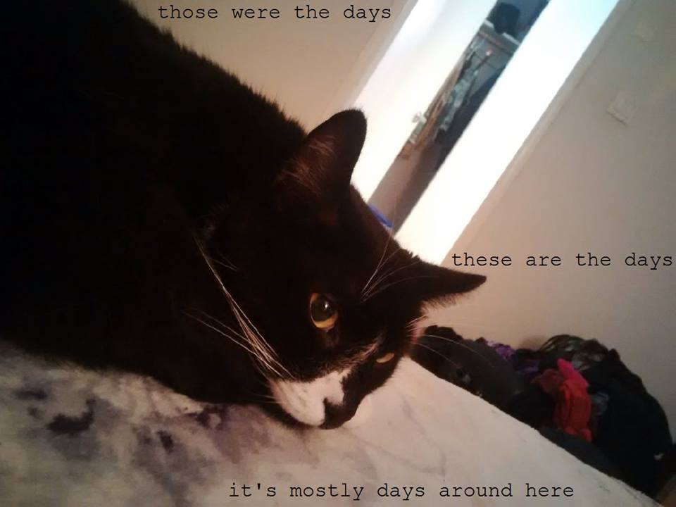 Macro by T Ruth Penslar; Cat's name is Abe the Cat