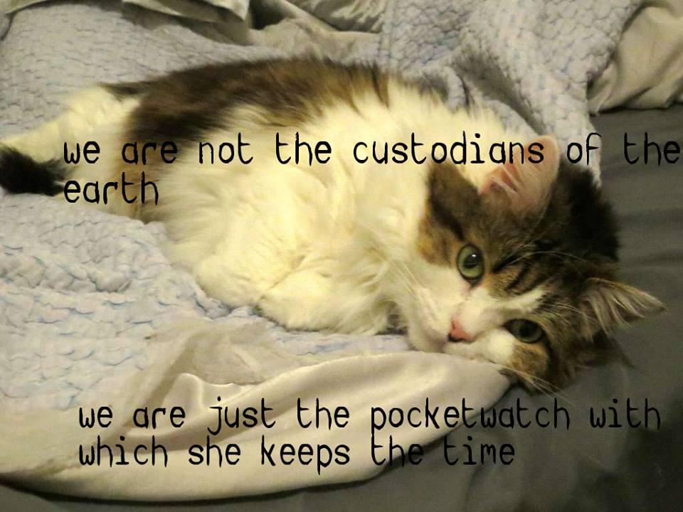 Macro by Caora; Cat's name is Penny