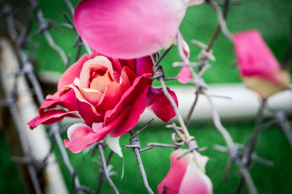 «Постель из роз», 2009