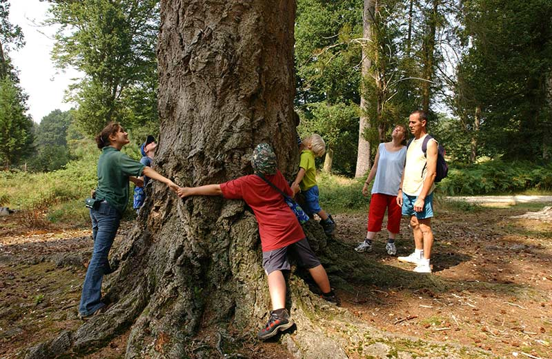 As well as the great energy makeover, Moors Valley also run environmental education. Tree hugging is optional. Photo: Moors Valley country park.