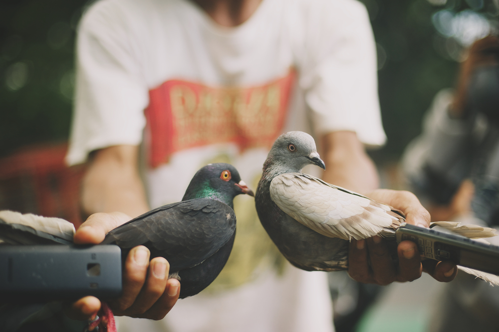 Carrier pigeons mobile phones jakarta indonesia