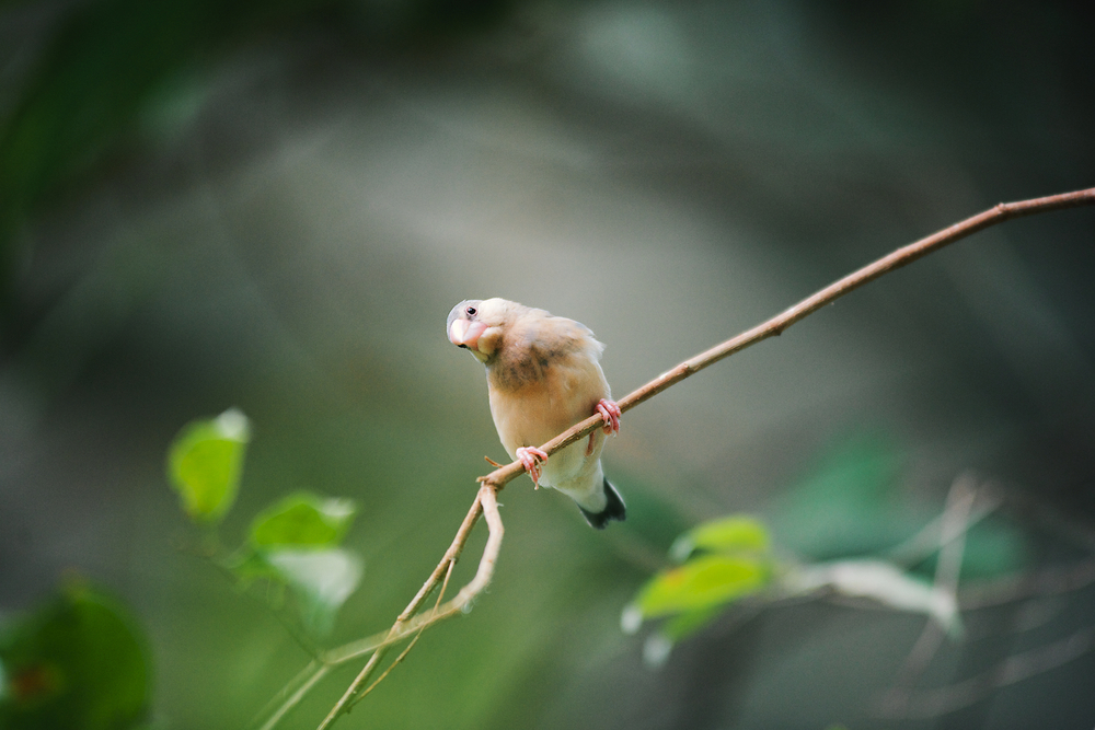 Depth-of-Field-Bird