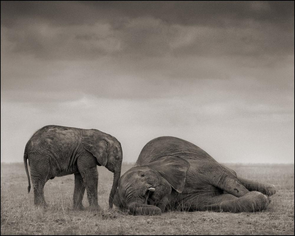 Elephants_Two_30_8_1024x1024.jpeg