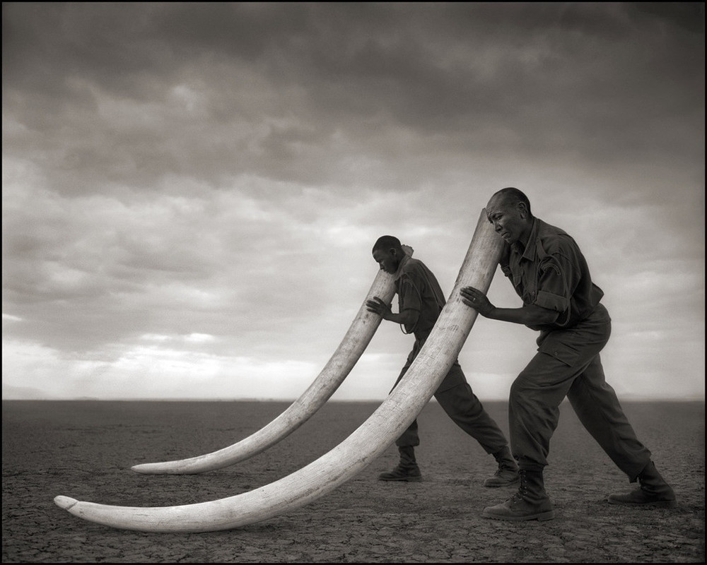 Rangers_Supporting_Tusks_of_Killed_Elephant_30-6_1024x1024.jpeg