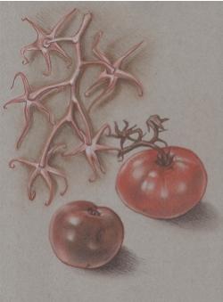 Tomatoes & Vine, ©2015 Joan Chamberlain