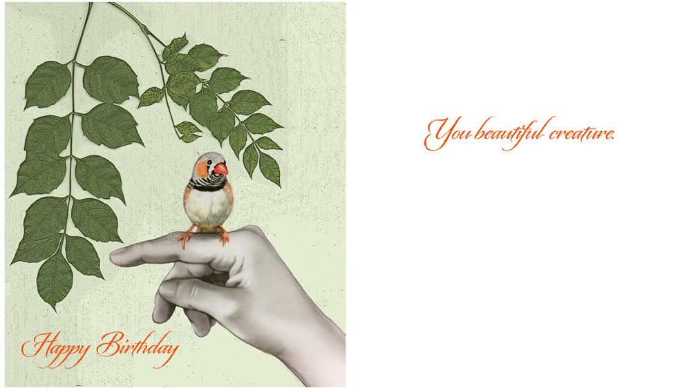 Birthday_beautiful-creature.jpg