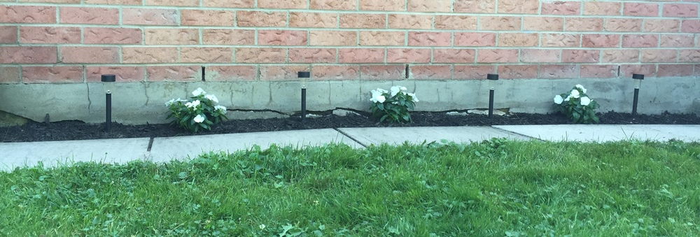 simple white annuals I plant each summer + solar lights