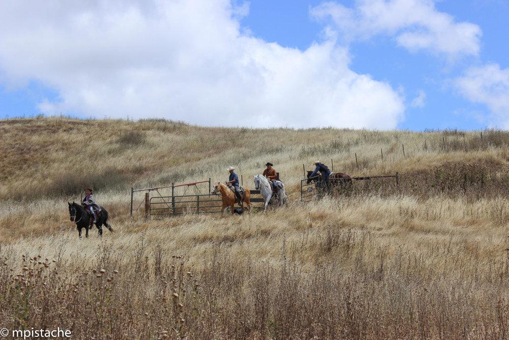 ScenaGarin-1411-cowboys.jpg