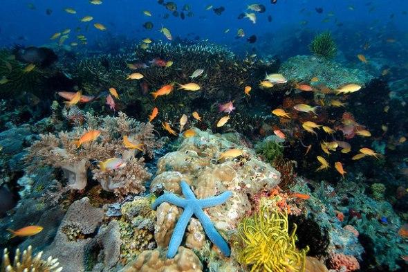 Apo Island 1.jpg