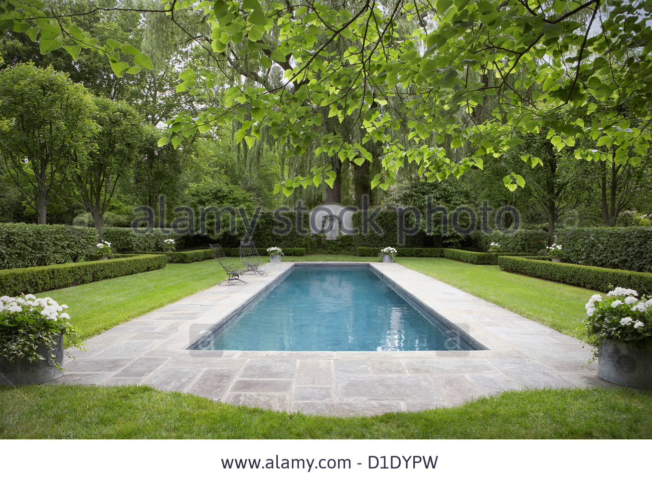 swimming-pools-formal-shaped-hedge-garden-with-narrow-pool-bluestone-D1DYPW