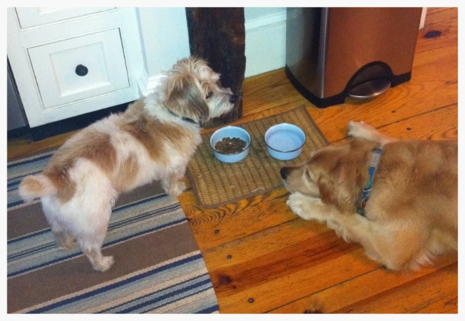 Abby waiting for Ryelee to walk away from his dish so she can finish his dinner!