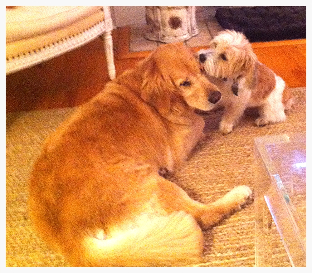 Sorry about the poor photo quality but couldn't resist posting this shot of Ryelee and Abby together.