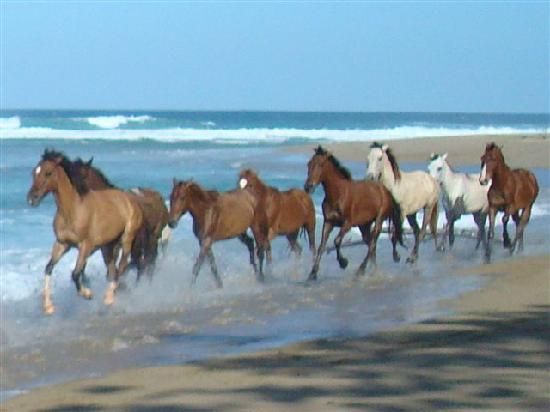horses-on-the-beach.jpg