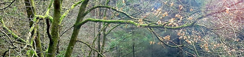 branches-bare-1.jpg