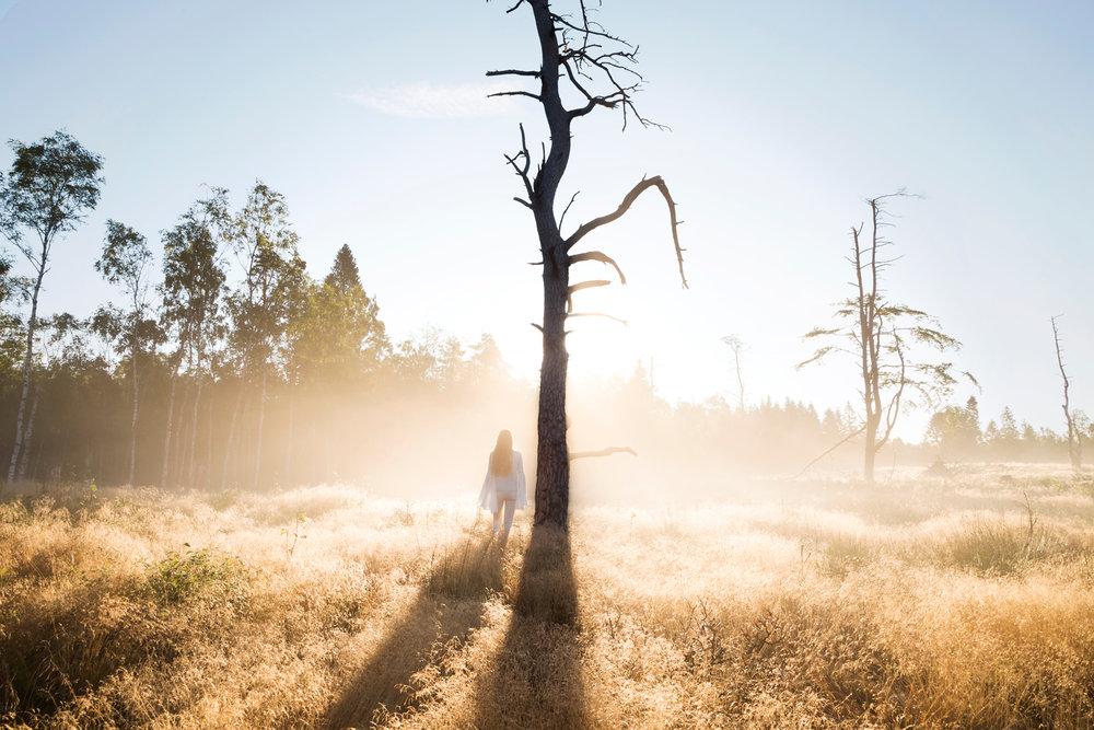 En fantastisk morgon när det bara var jag, skogen och morgondimman.