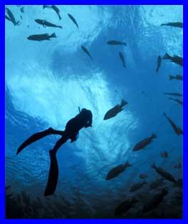 diving_sm.jpg