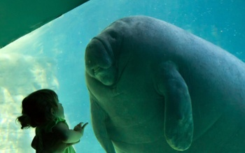 Aquarium-Manatee-Little-Girl-1024x640.jpg